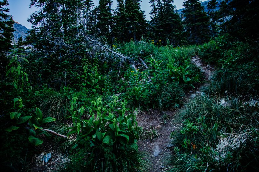 2018_August 7th_Piegan Mountain_Glacier National Park (1 of 218) downsized.jpg
